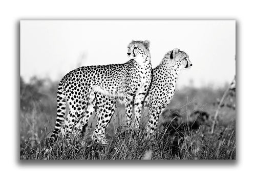 Large Format Canvas - Cheetah Mound