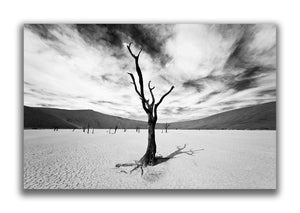 Large Format Canvas - The Deadvlei