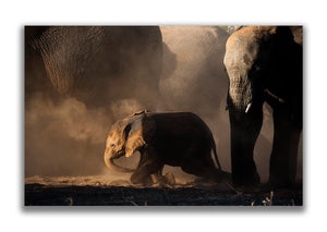 Large Format Canvas - Elephants Dusting