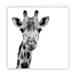 Special Pack 1 - Large Greeting Cards - 10 Assorted