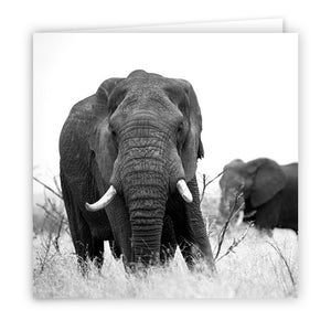 Large Greeting Card GC101 African Elephant