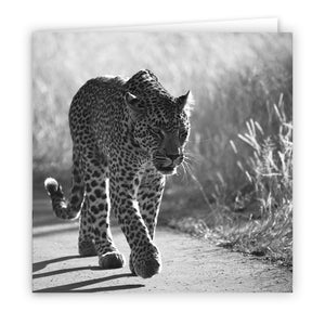 Large Greeting Card GC109 Leopard