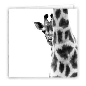 Large Greeting Card GC123 Giraffe