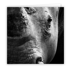 Large Greeting Card GC129 White Rhinoceros