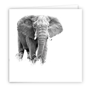 Large Greeting Card GC131 African Elephant