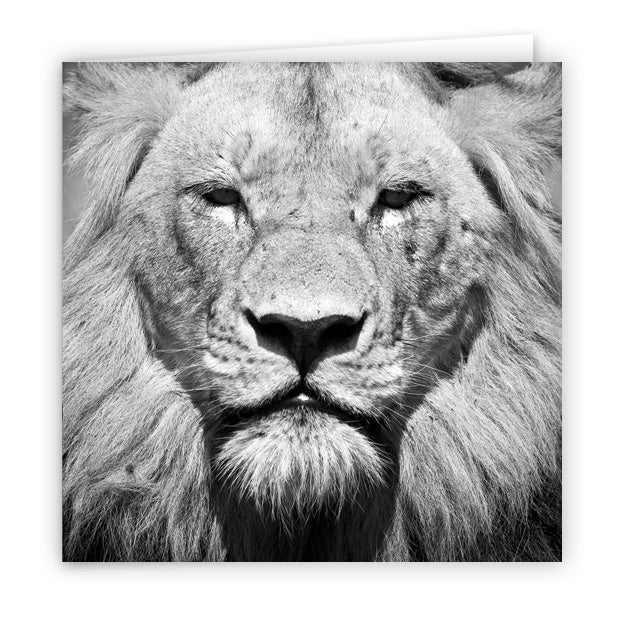 Large Greeting Card GC132 Lion