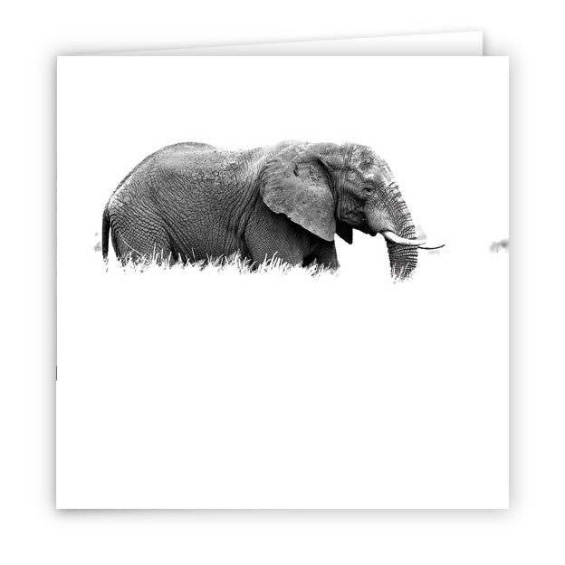 Large Greeting Card GC138 African Elephant