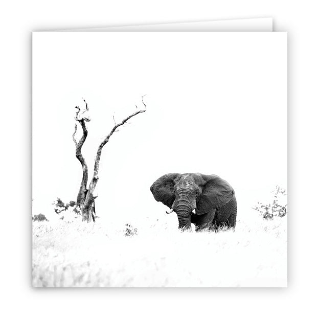Large Greeting Card GC145 African Elephant