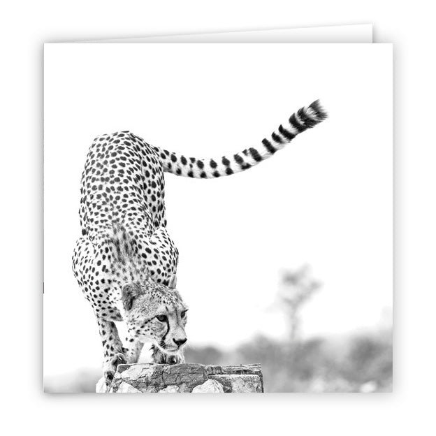 Large Greeting Card GC146 Cheetah