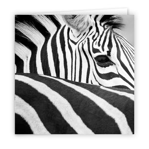 Large Greeting Card GC147 Zebra
