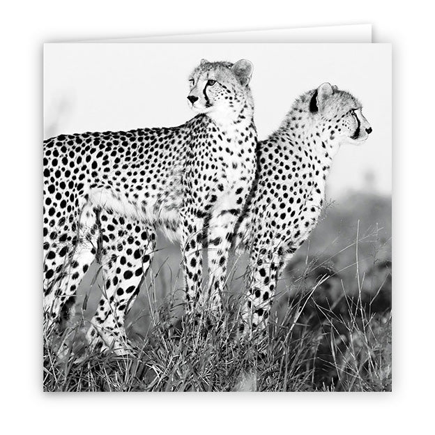 Large Greeting Card GC173 Cheetah