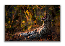 Large Format Canvas - Leopard Light