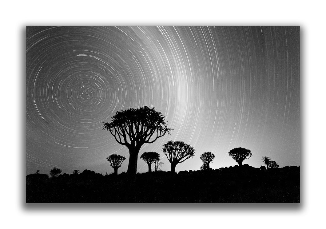Large Format Canvas - Quiver Trees and Star Trails
