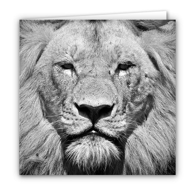 Small Greeting Card SGC105 Lion