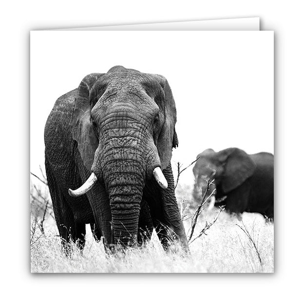 Small Greeting Card SGC107 Elephant