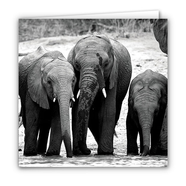 Small Greeting Card SGC110 Elephant