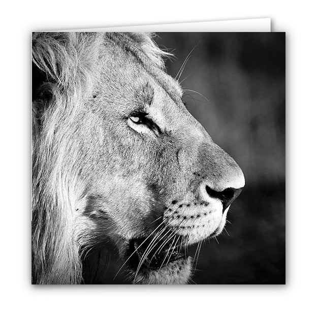 Small Greeting Card SGC114 Lion
