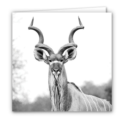 Small Greeting Card SGC121 Kudu