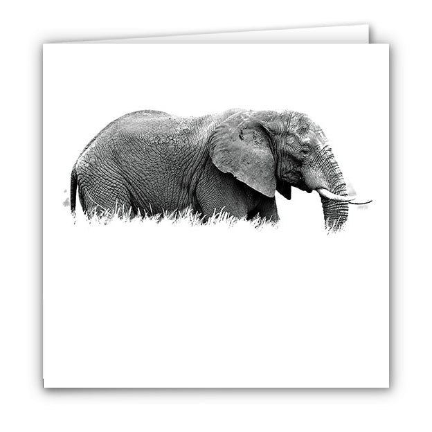 Small Greeting Card SGC126 Elephant