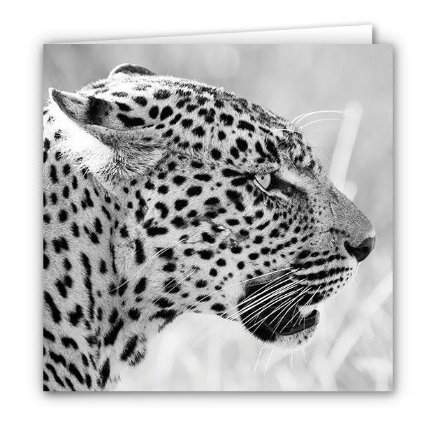 Small Greeting Card SGC130 Leopard
