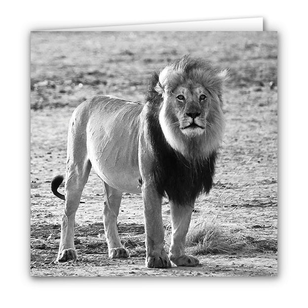 Small Greeting Card SGC132 Lion