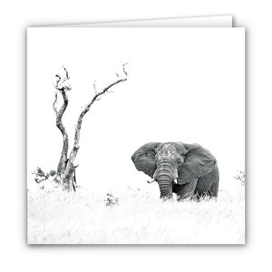 Small Greeting Card SGC138 Elephant