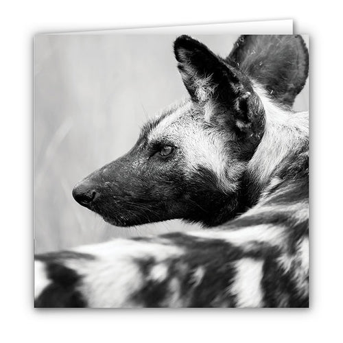 Small Greeting Card SGC139 Wild Dog