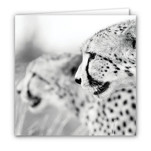 Small Greeting Card SGC147 Cheetah