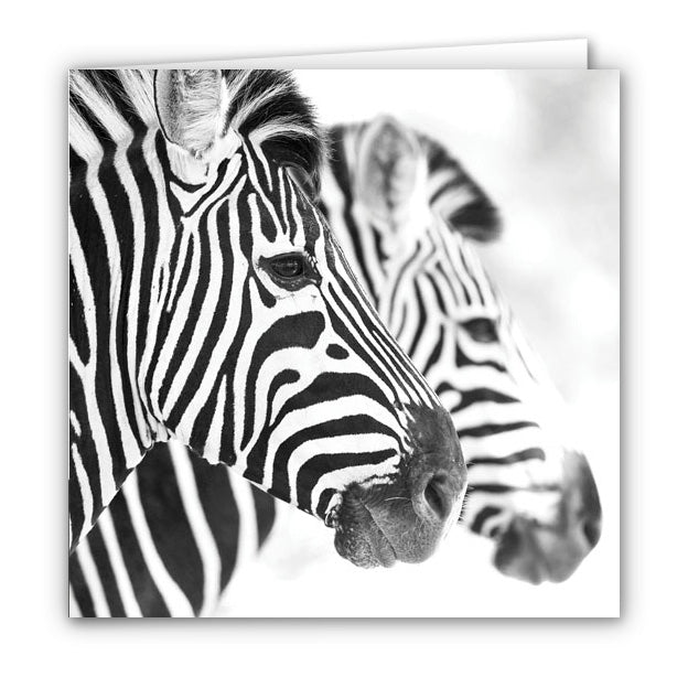 Small Greeting Card SGC154 Zebra