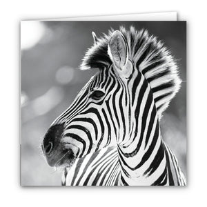 Small Greeting Card SGC155 Zebra