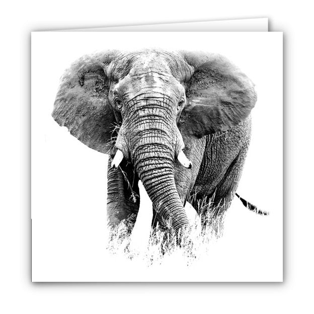 Small Greeting Card SGC156 Elephant