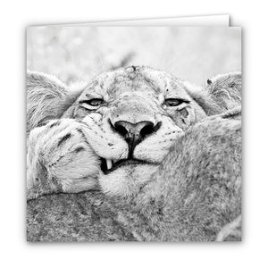 Small Greeting Card SGC160 Lion