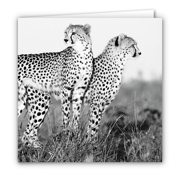 Small Greeting Card SGC162 Cheetah