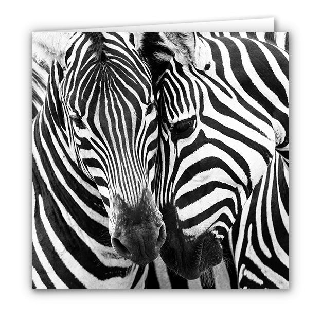 Small Greeting Card SGC163 Zebra