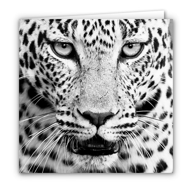 Small Greeting Card SGC164 Leopard