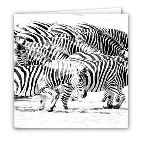 Small Greeting Card SGC168 Zebra