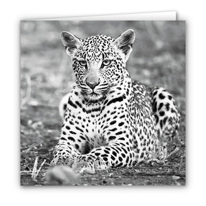 Small Greeting Card SGC169 Leopard