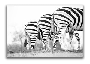 Large Format Canvas - Zebra Bums