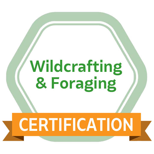Wildcrafting & Foraging eCourse