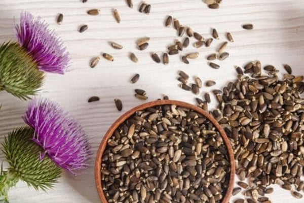 Silymarin Milk Thistle – The Ultimate Liver Supplement