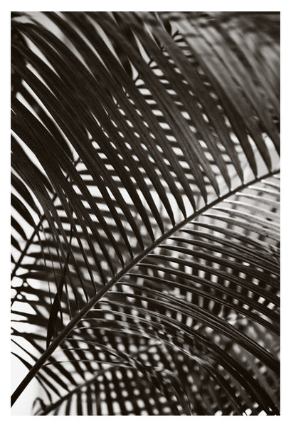 Palm In Gray #5 - Fine Art Photograph