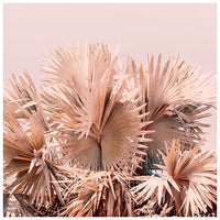 Coral Palms - Fine Art Photograph
