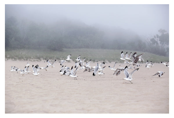 Fog and Friends - Fine Art Photograph