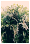 Jungle Sun - Fine Art Photograph