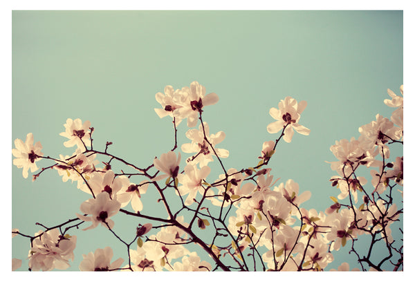 Spring Skies - Fine Art Photograph
