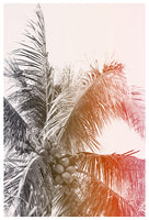 Toasted Coconut - Fine Art Photograph