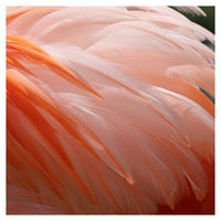 Flamingo #9 - Fine Art Photograph
