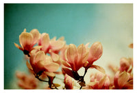 Watercolor Magnolias - Fine Art Photograph