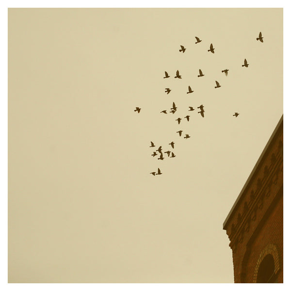 Flying Home - Fine Art Photograph