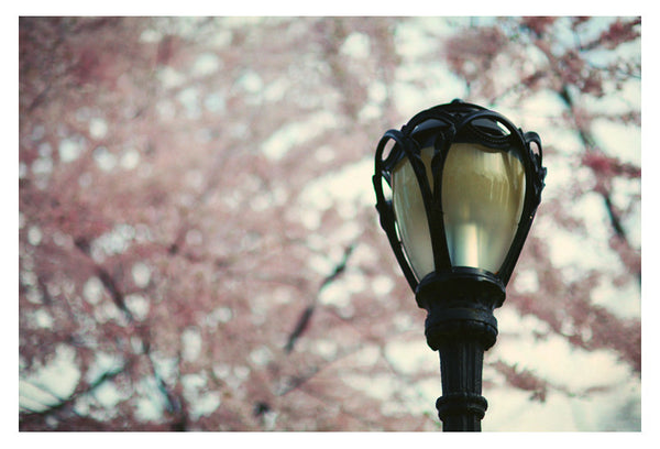 Central Park in Bloom #7 - Fine Art Photograph